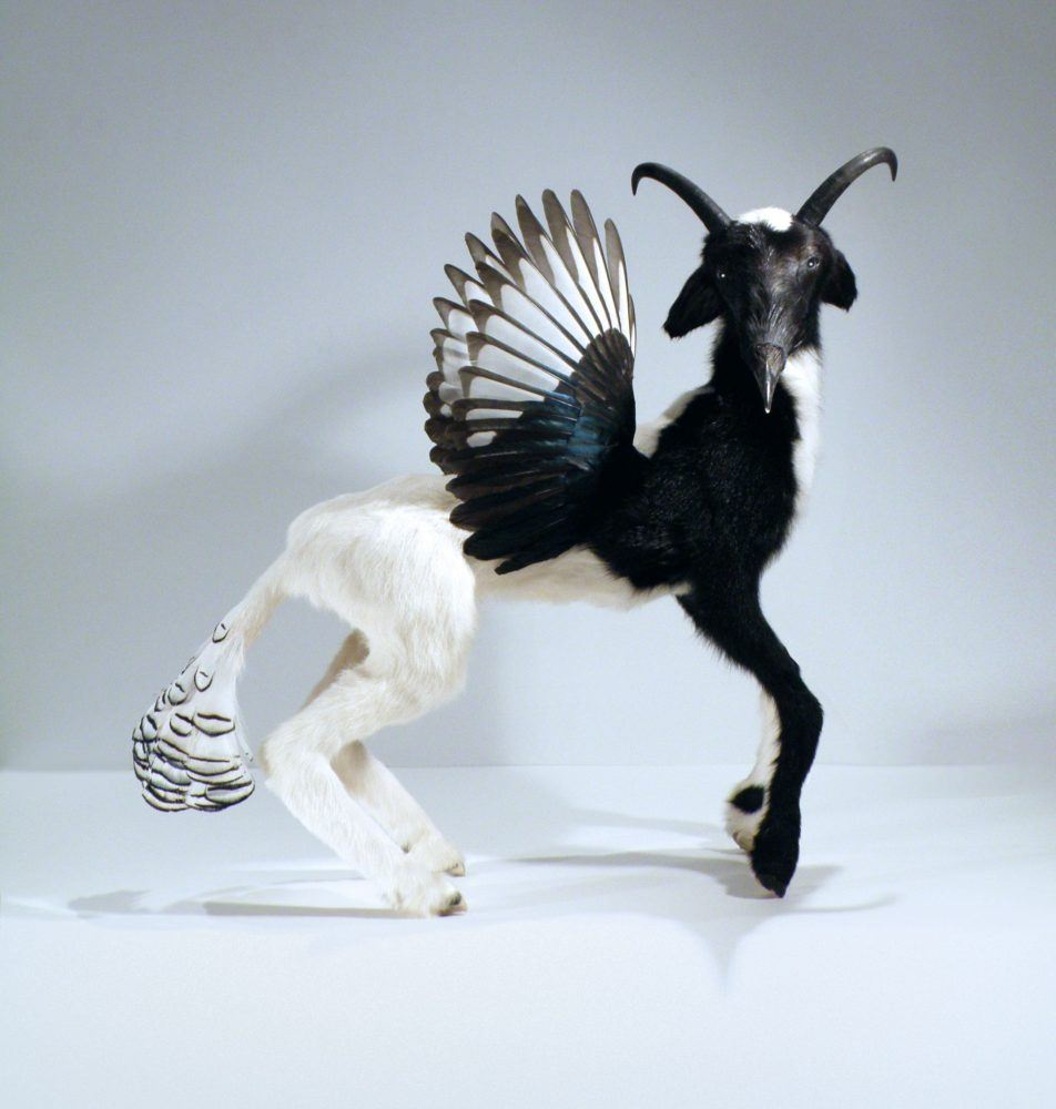 ChroMo' (Ovis pica) | Taxidermy Artist | Janec van Veen | Playful and Horrific, Wondrous and Terrifying