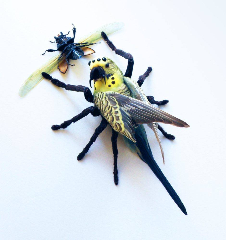 Spyder (Melopsittacus spinicrus) | Taxidermy Artist | Janec van Veen | Playful and Horrific, Wondrous and Terrifying